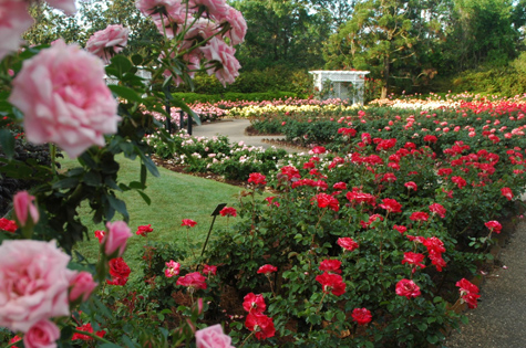 the bellingrath rose garden bellingrath gardens home - Pictures Of Rose Gardens