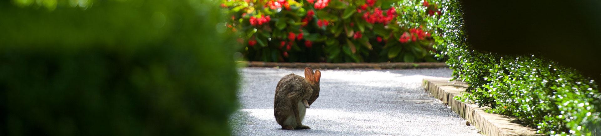 bunny_1920_435