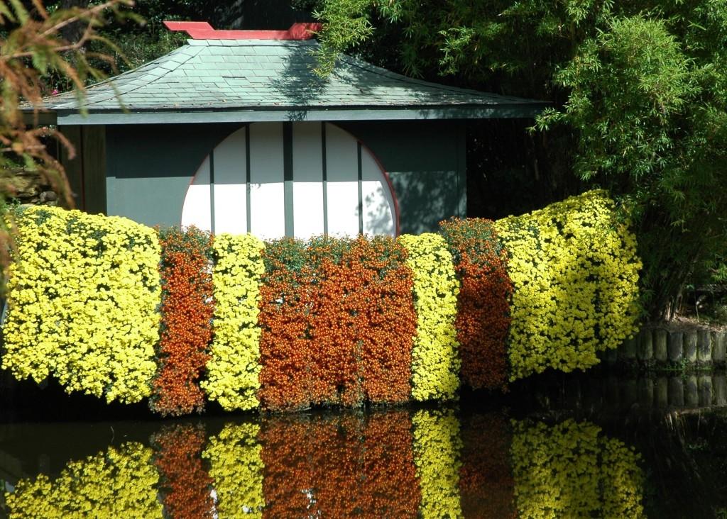 Cascade mums on the bridge in the Asian Garden.