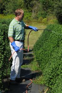 Chuck Owens, Nursery Manager, applies growth regulators to the cascade mums.