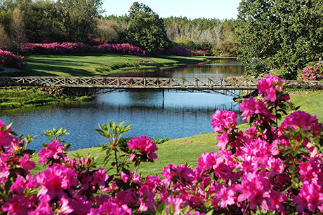 Azaleas are blooming at Bellingrath Gardens in Mobile, Alabama.