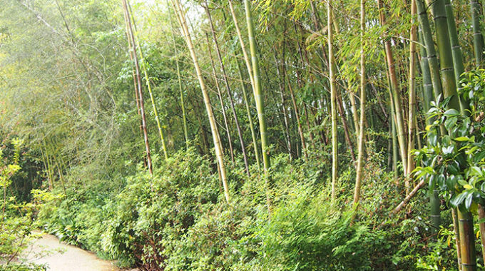 Bellingrath's Magical Bamboo Groves