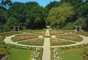 The original Rose Garden, designed to resemble the shape of Walter Bellingrath's Rotary Club pin. Mr. Bellingrath was a founding member of the Mobile Rotary Club, which marked its 100th anniversary in 2014.