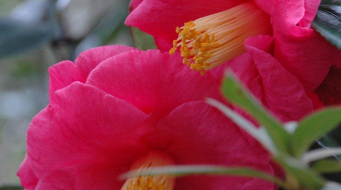 Blooms And Beauty Year-round: Winter Gardening On The Gulf Coast
