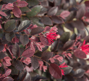 New Plants For You Ideas To Solve Your Landscape Challenges