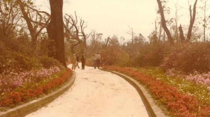 Remembering Hurricane Frederic: The Gardens' Long Road To Recovery