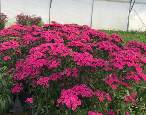 Coping With The Cold: Advice From Bellingrath Nursery Manager Chuck Owens