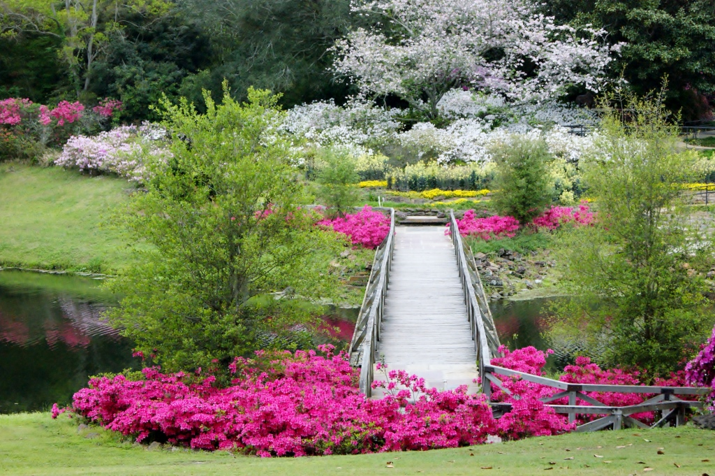 Azaleas: \'The flaming drama of the South\' – Bellingrath Gardens & Home